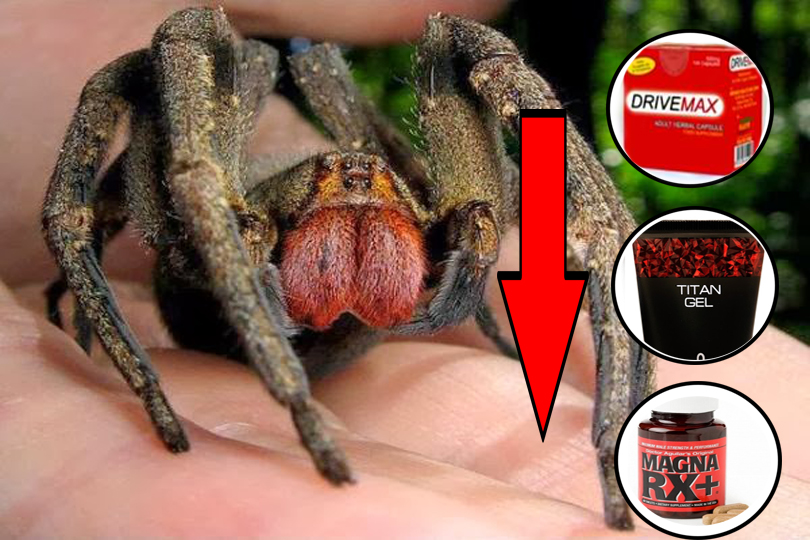 Spider that Gives 4 hours of Erection
